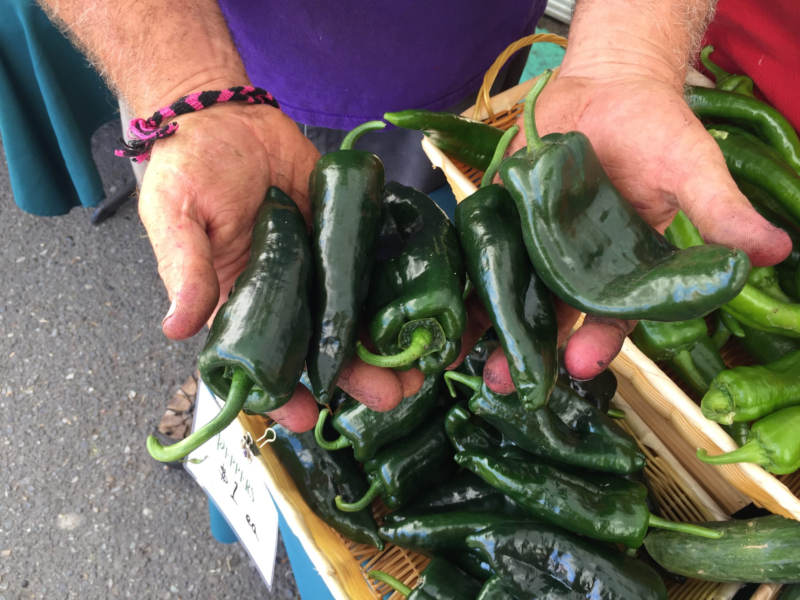 A close-up of hands full of dark green fresh peppers